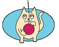Cat-care3