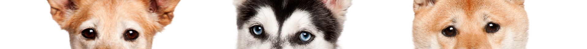 Dogs-Banner-4s