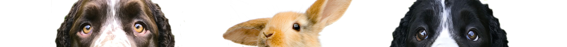 Dogs-bunny-banner