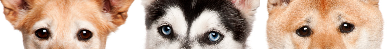 Dogs-Banner-4s-m